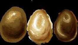 Dragon eggs by Entomologia