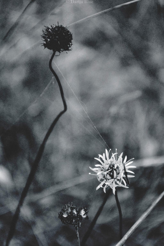 cruel by Darija-Blue