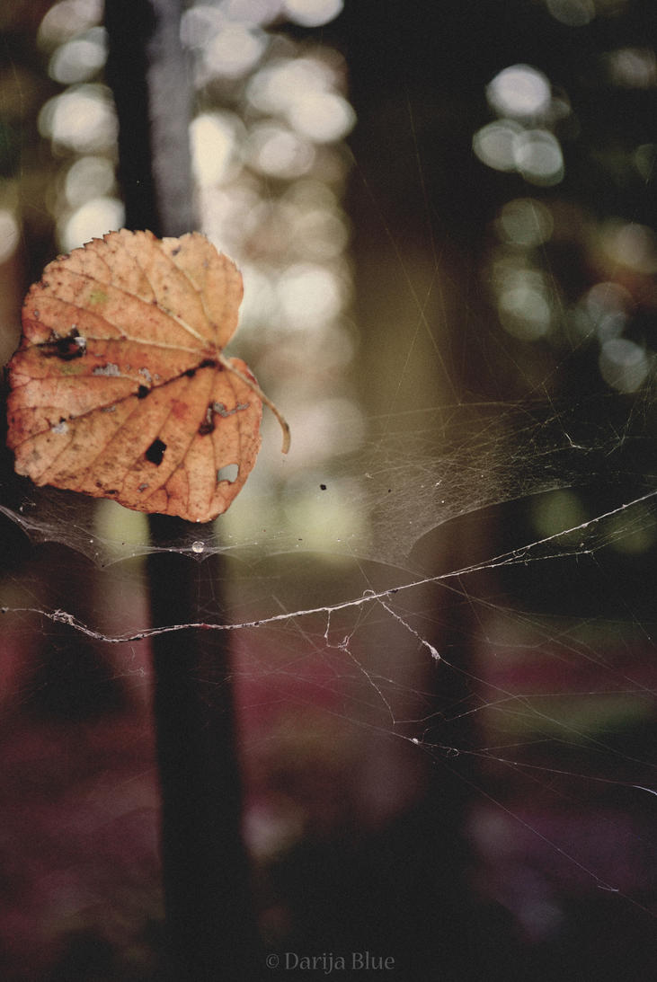 silk and scars by Darija9