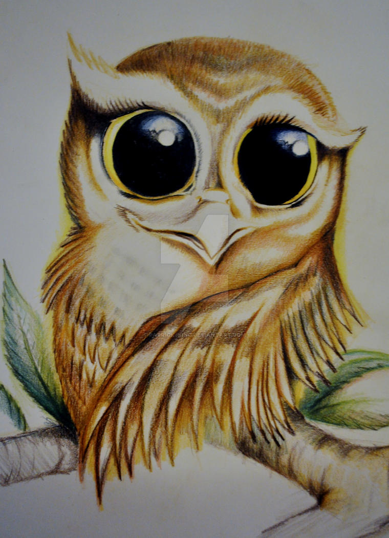 Owl Drawing Color Owl Drawing by Patrickjking