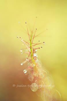 Bubbly stem