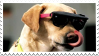 cool dog stamp by KlonoaOfTheWind