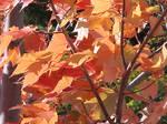 Leaves - 1
