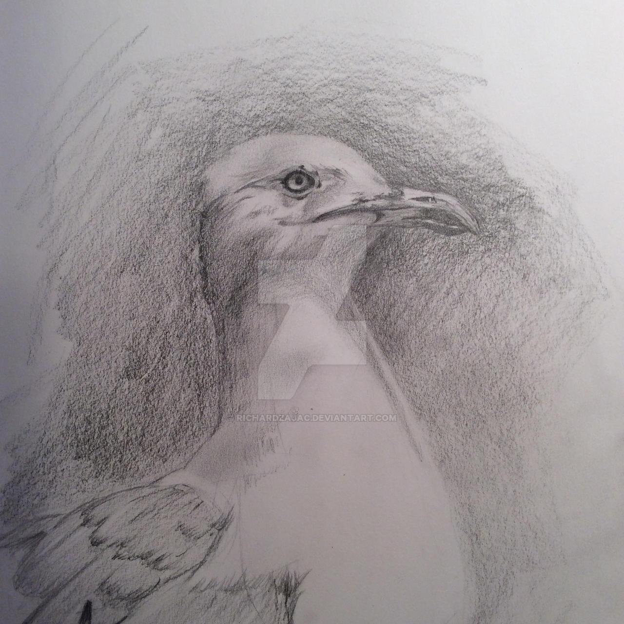 Seagull by Richard Zajac