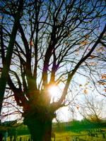 Autumn Noon Sun by MontyMouse
