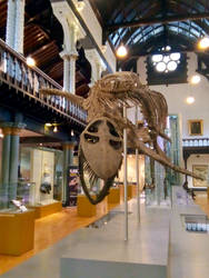 Plesiosaur at the Hunterian by MontyMouse