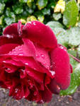 Tears in the rain. by MontyMouse