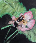 Bug on Flower World Watercolour Month Day 4