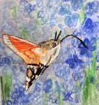 Hummingbird Hawk Moth World Watercolour Month Day9