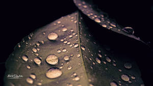 After Rain... by xeeshan-ch