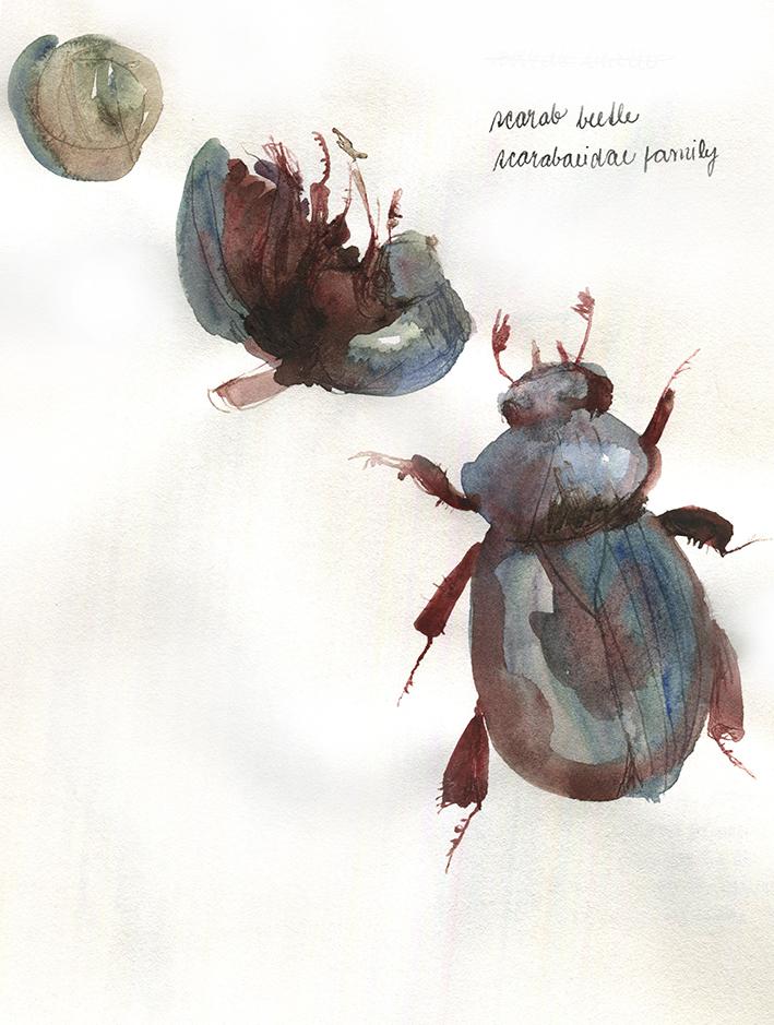 Scarab beetle by KattyC