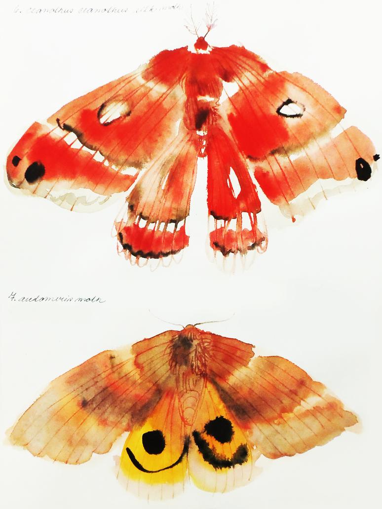 Moths by KattyC