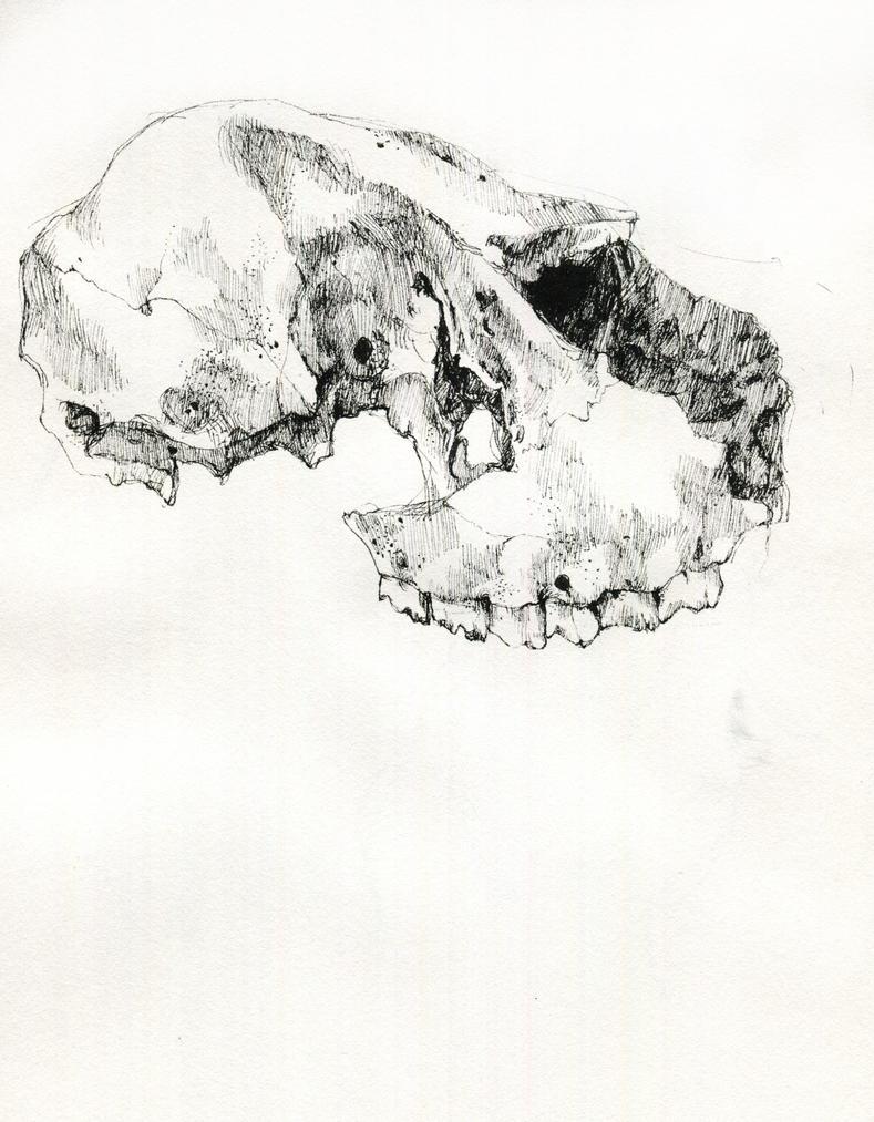 Skull by KattyC
