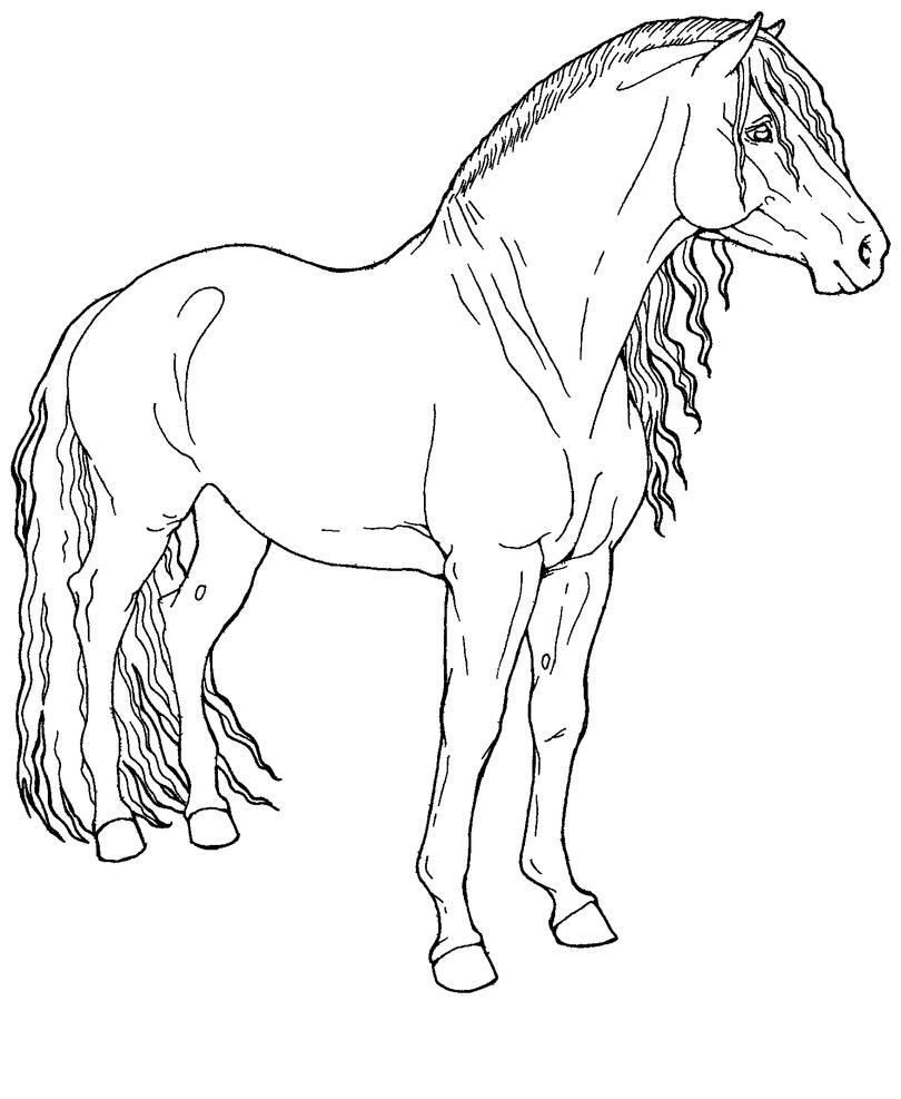 Free Line Art : Free line art paso horse by applehunter on deviantart
