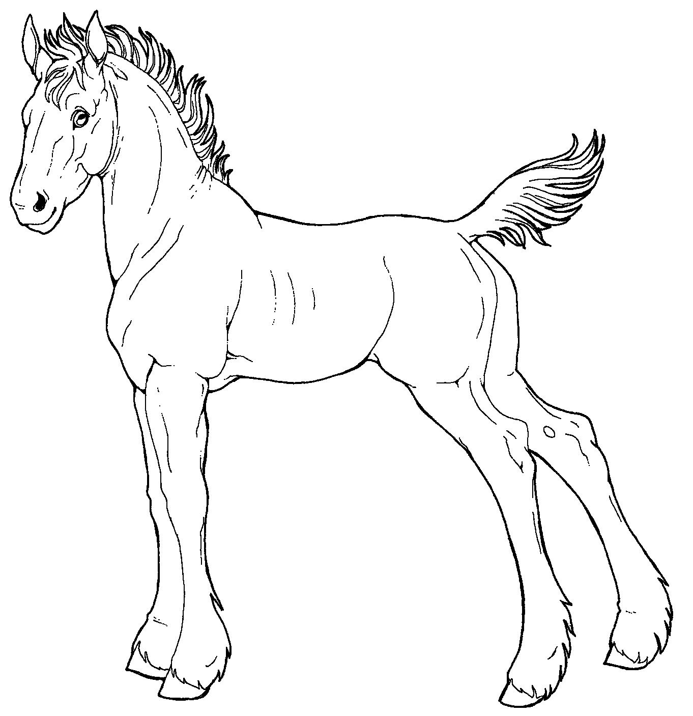Line Drawing Of Horse : Free line art draft foal by applehunter on deviantart