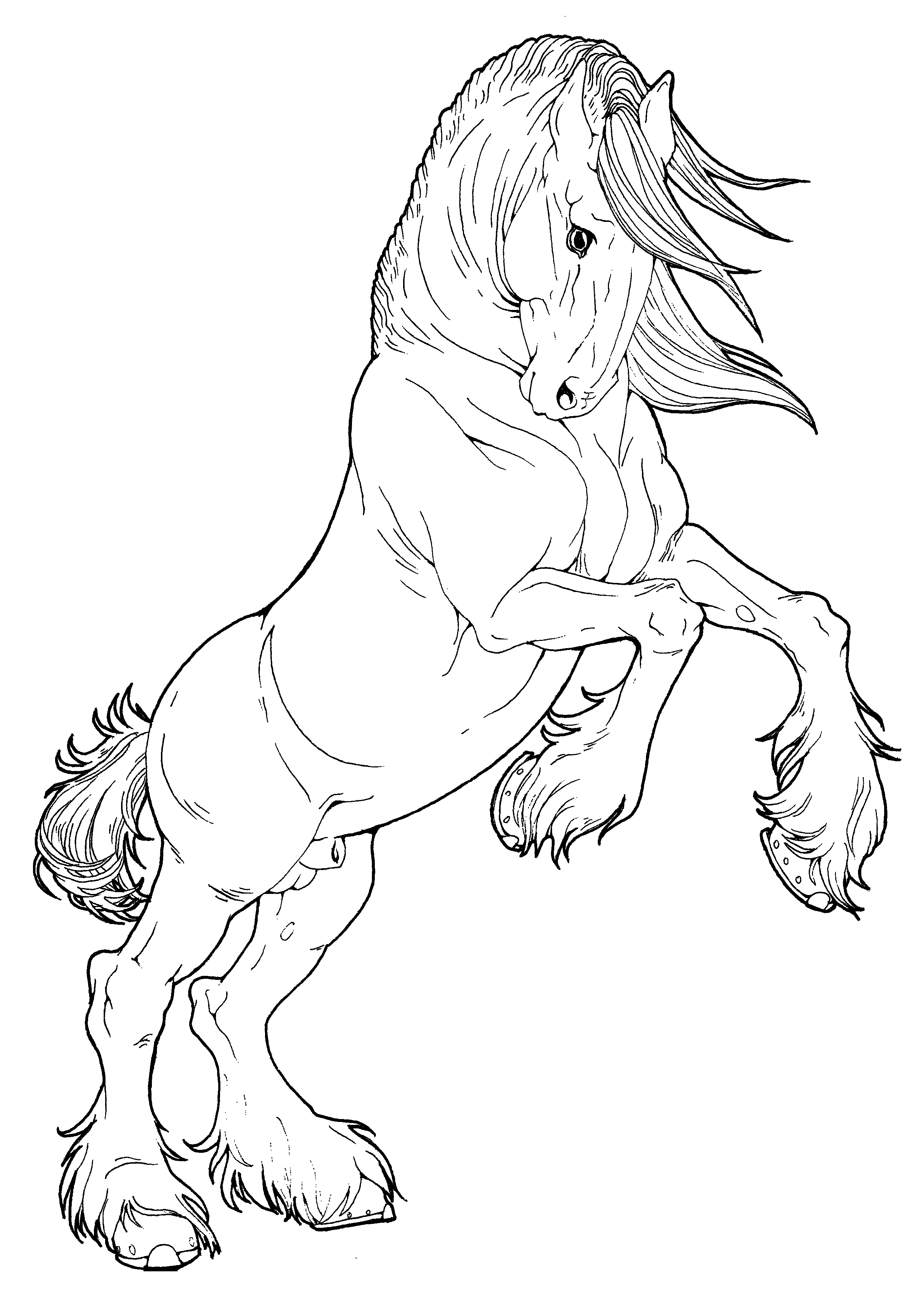 Gypsy Vanner Horse Coloring Pages Coloring Pages