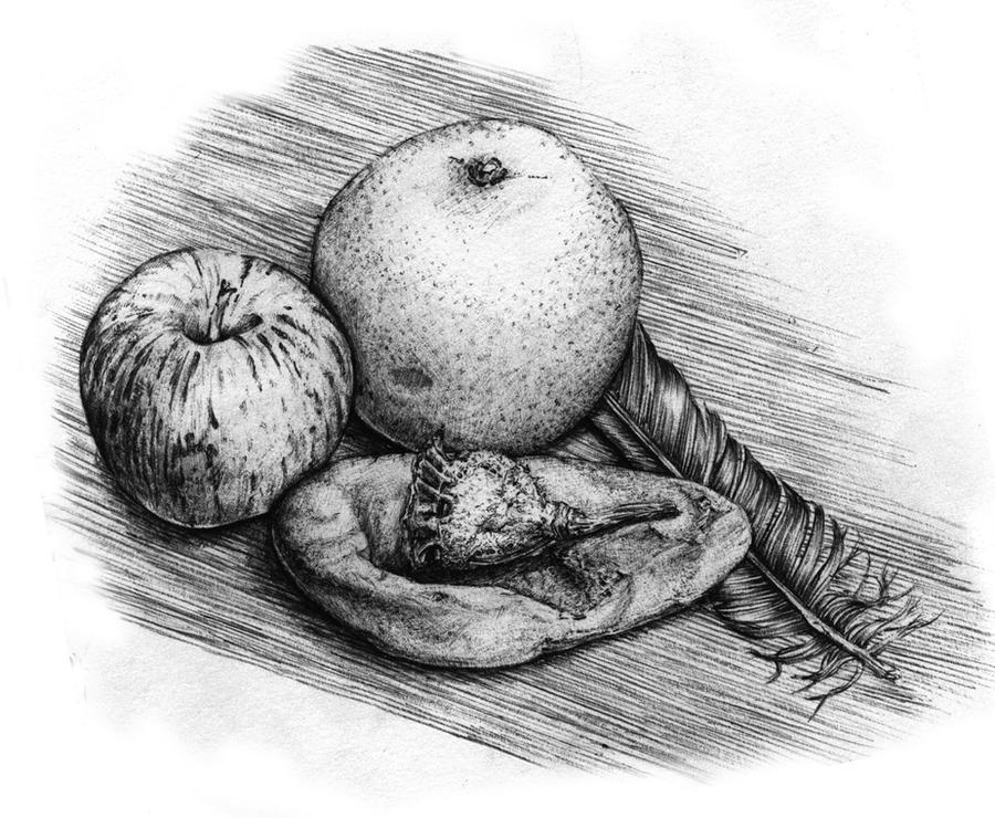 Line Drawing Natural Forms : Still life natural forms by carolin on deviantart