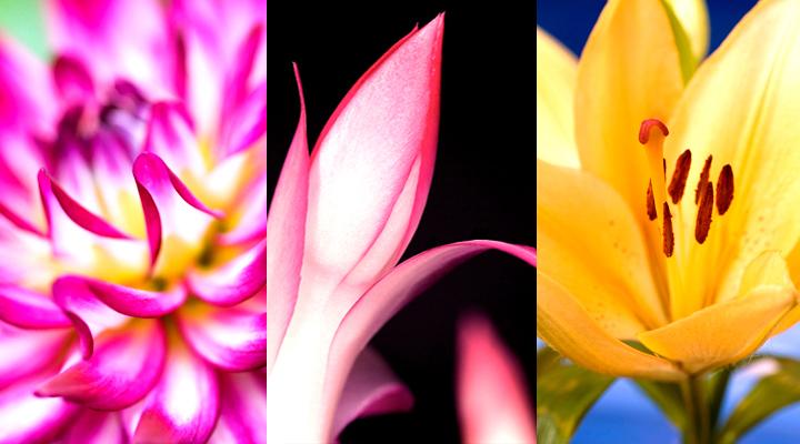 samsung star wallpaper flowers by janinatju