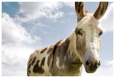My Mule by littledesignshop