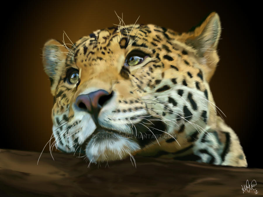 Leopard by PINKTHONG