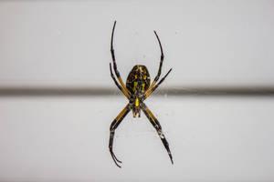 Big Spider by DeadLetterDesign