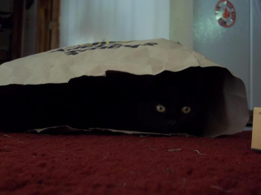 Cat in a bag by Akatsuki2011