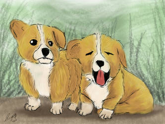 Shiba Inu puppies by MariaChrystal
