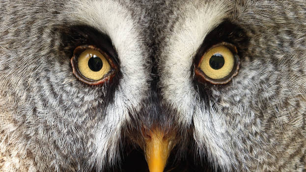 look at my eyes