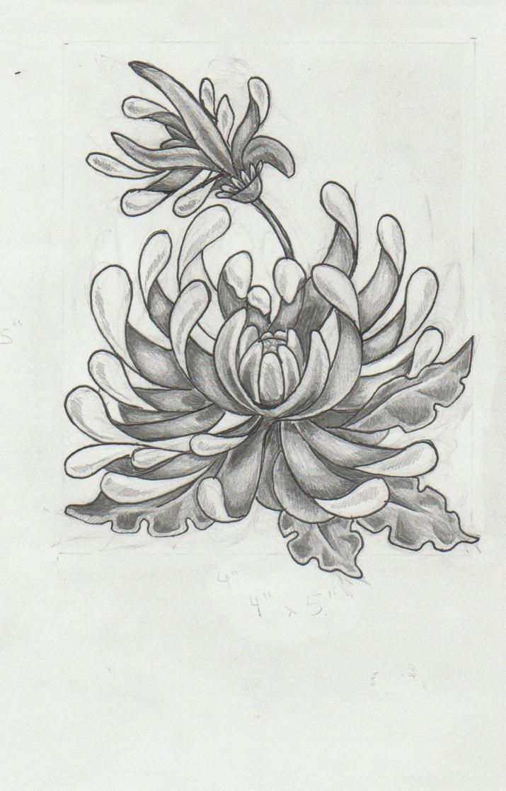 Drawings Flowers Amp More On Pinterest Peony Drawing Flower Drawings And Peonies