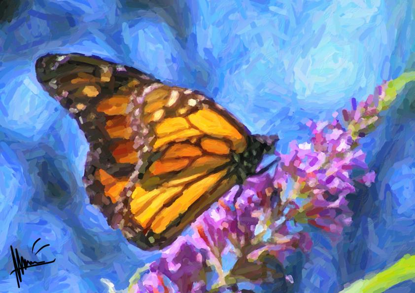 Butterfly by Miaw-Asakura