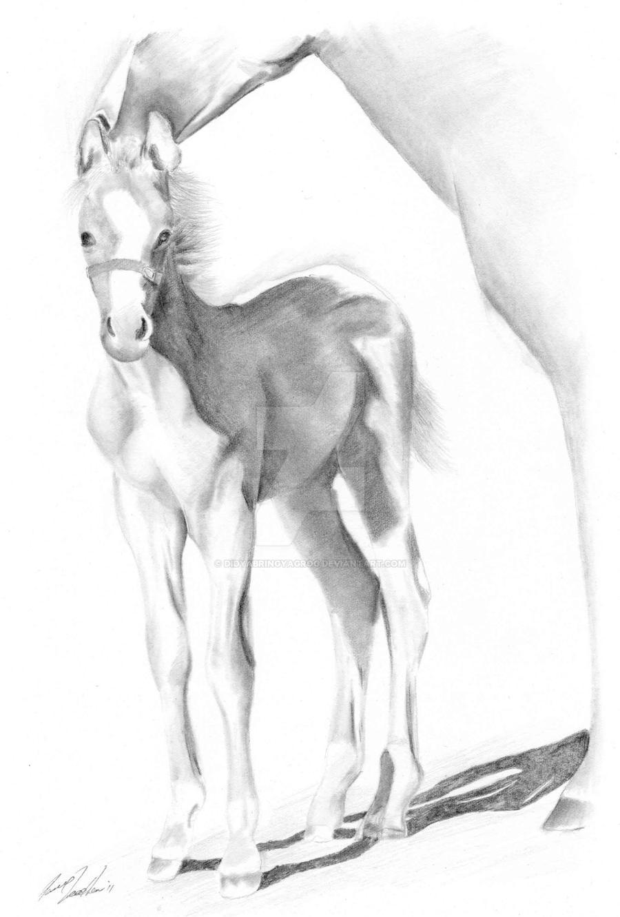 Foal 1 by didyabringyagrog