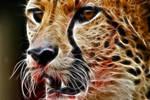 Fractal Cheetah 3