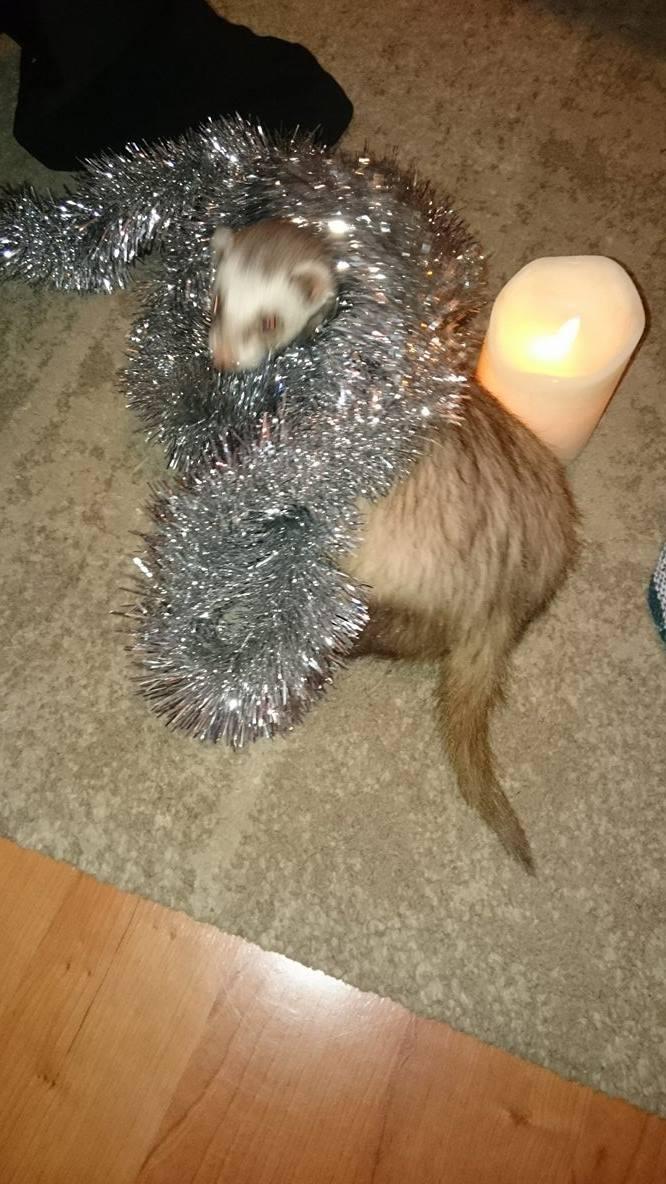 Arya Getting Ready For Christmas by AngelusDarkholm