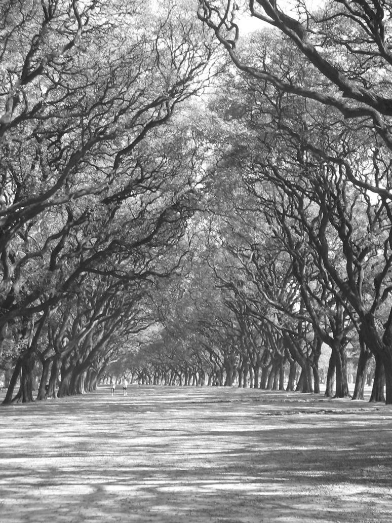 Tunnel tree path by SilverWildeRose