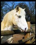 Horse Portrait by KJSummerfield