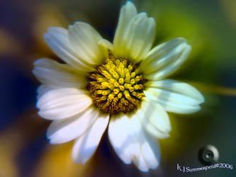 'Daisy, daisy..' by KJSummerfield