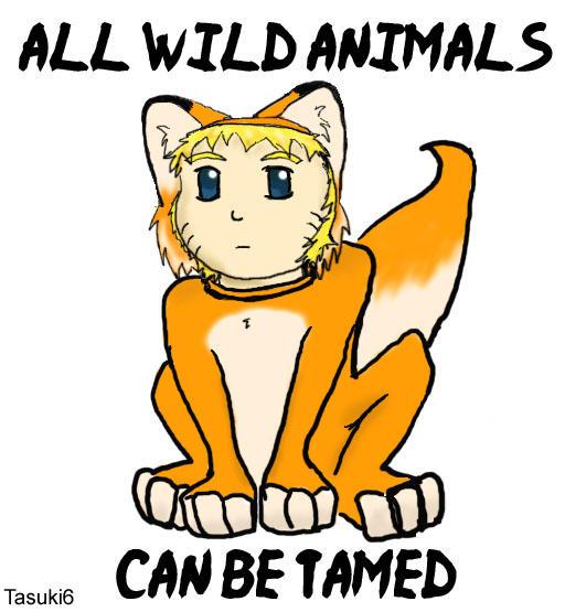 Wild animals ca...