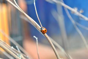 ladybug. by MelanieMaterne