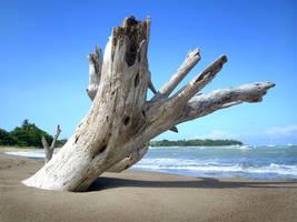 Beached by Naifud