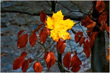 November Star by Naifud