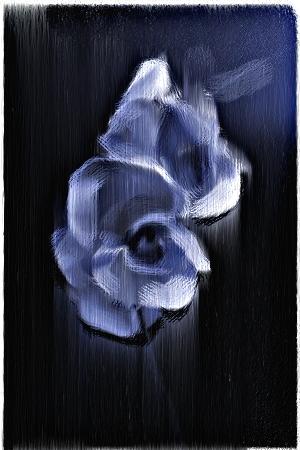 Orchid by NeaLumina