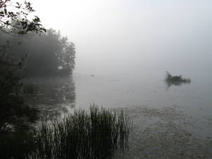 Foggy Lake - 1