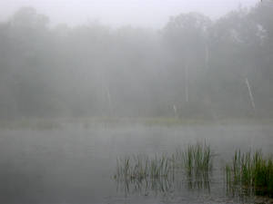 Foggy Lake - 3