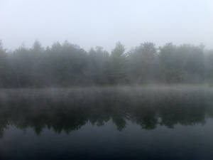 Foggy Lake - 7
