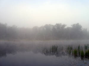 Foggy Lake - 9