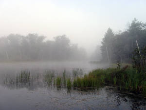 Foggy Lake - 10