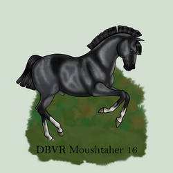 DBVR Moushtaher 16