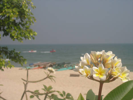 Flowers in Thailand..