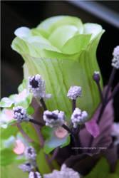 Infrared Flower