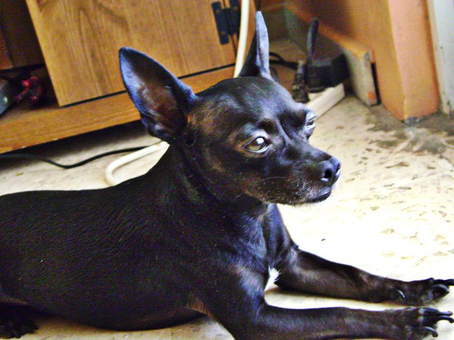 The Pensive Puppy by mizsprieta
